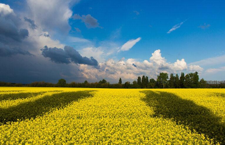 Бути українцем — це обривати пелюстки марних надій з троянди будь якої влади