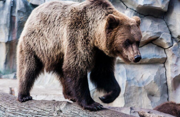 Киевский зоопарк на время локдауна снизил цены и изменил режим работы
